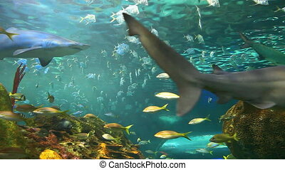 School of tropical fish with sharks