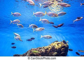 School of Tuna Fish in the Sea.
