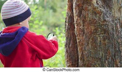 Schoolboy in the Park studies of plants and nasekomye...