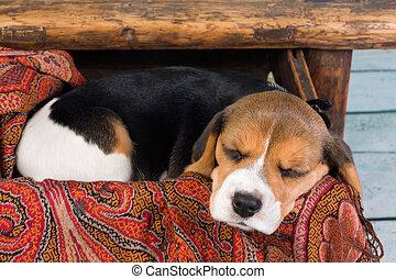 Schublade, junger Hund