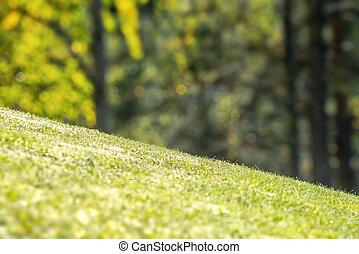 schuin, achterplaats, met, vibrant, groen gras