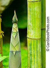 schuss, bambus