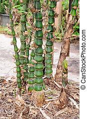 schuss, bambuswald, regen