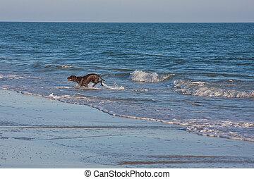 schwärzen labrador, apportierhund, hund