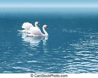 schwan, zwei
