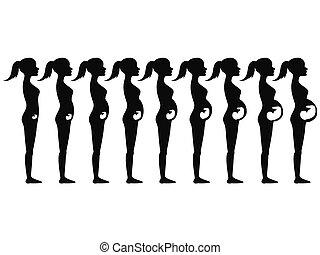 schwangerschaft, stadien, silhouette