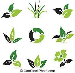 schwarz, blätter, weißes, grün, freigestellt