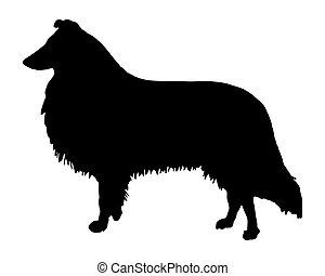 schwarz, collie, silhouette, longhaired