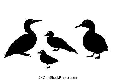 schwarz, ente, hintergrund., abbildung, silhouette, weißes, vektor