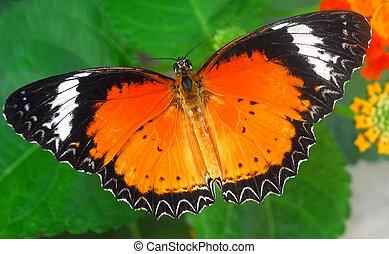 orange schmetterling insekt schwarz papillon f tterung blatt insekt schwarz orange gr n. Black Bedroom Furniture Sets. Home Design Ideas