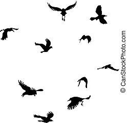 schwarz, silhouette, rabe