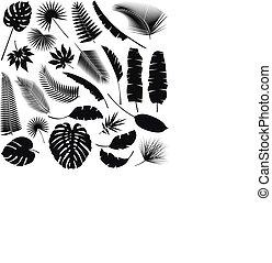 schwarz, tropische , blätter, sammlung