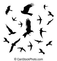 schwarz, weißes, silhouette, vögel, hintergrund