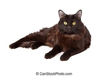 schwarze katze, faulenzend