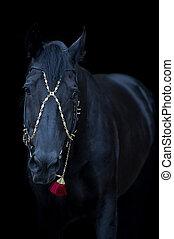 schwarzer hintergrund, pferd, freigestellt, porträt