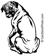 schwarzer hund, boxer, weißes