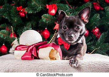 schwarzer hund, mit, schlips, und, mit, weihnachten, knochen, geschenk, mit, weihnachtsbaum