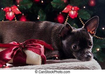 schwarzer hund, mit, weihnachten, knochen, geschenk