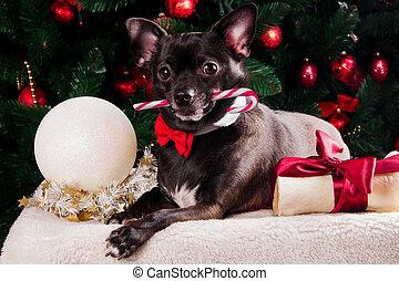 schwarzer hund, mit, weihnachten, knochen, geschenk, mit, weihnachtsbaum