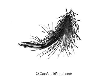 schwarzer schwan, feder