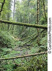 schwarzwald, mossy, floresta