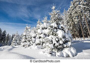 schwarzwald, schneesegen, im