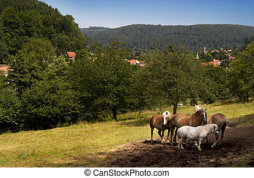 Schwarzwald view - A view to Schwarzwald countryside with a...