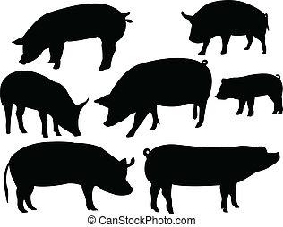 schweine, sammlung