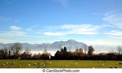 schweiz, landschaftsbild