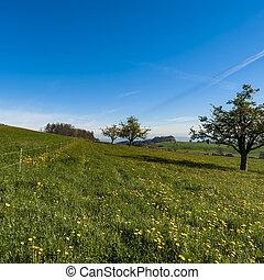 schweizerisch, wiesen, landschaftsbild