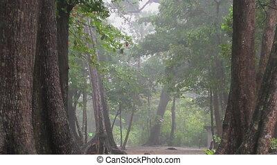 schwer, Regen,  rainforest