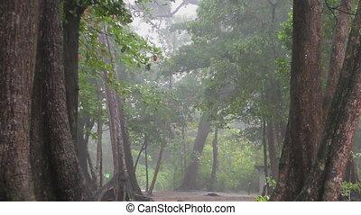 schwerer regen, in, der, rainforest