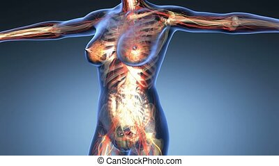 science anatomy of human body - science anatomy of human...