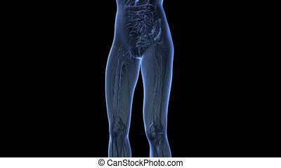 human body in x-ray