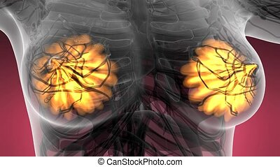 science anatomy of human body in x-ray with glow mammary...