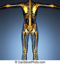 science anatomy of human body in x-ray with glow skeleton bones