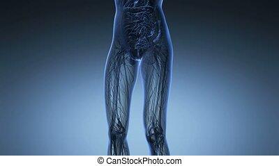 science anatomy of human body