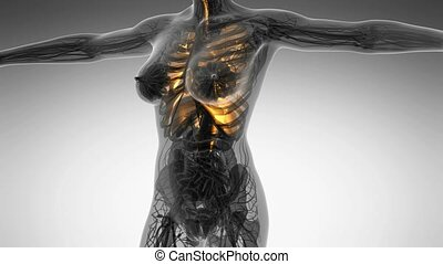 science anatomy of human body