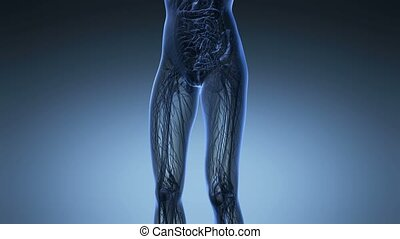 science anatomy of woman body