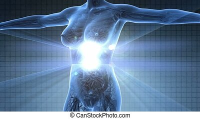 human body in x-ray - science anatomy scan of human body in...