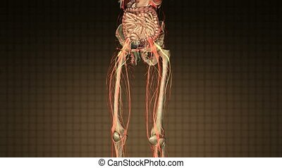 science anatomy scan of human body