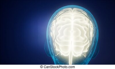 science anatomy scan of human brain and nerves glowing