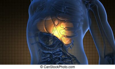 science anatomy scan of human liver glowing with yellow