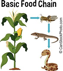 Science Basic Food Chain illustration