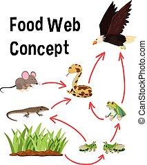 Science food web concept illustration