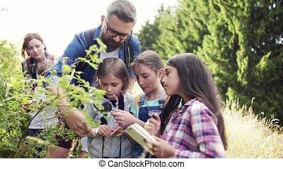 science., természet, tanár, csoport, gyerekek, mező út,...
