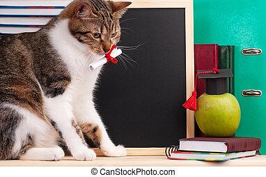 Scientific cat