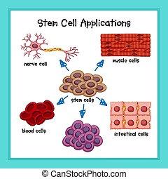 Scientific medical illustration of stem cell applications