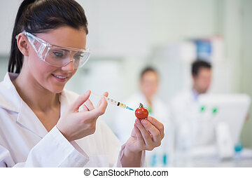 Scientific researcher injecting tomato at lab