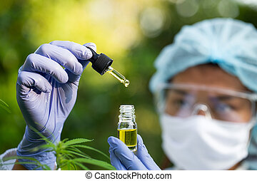 Scientist Analyzing and researching hemp oil extracts,  Concept of herbal alternative medicine, cbd hemp oil, pharmaceptical industry.